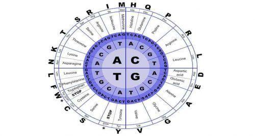 que son los aminoacidos y sus funciones