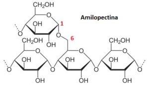 amilopectina que es