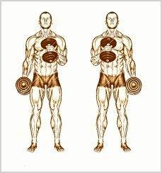 curl de biceps mancuernas